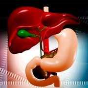 Fosfolipidy a leczenie wątroby