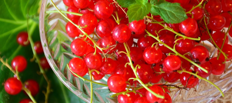 warzywa i owoce sezonowe