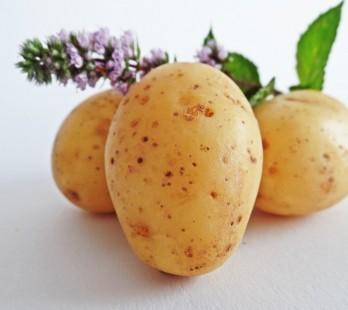 ziemniak czy kartofel